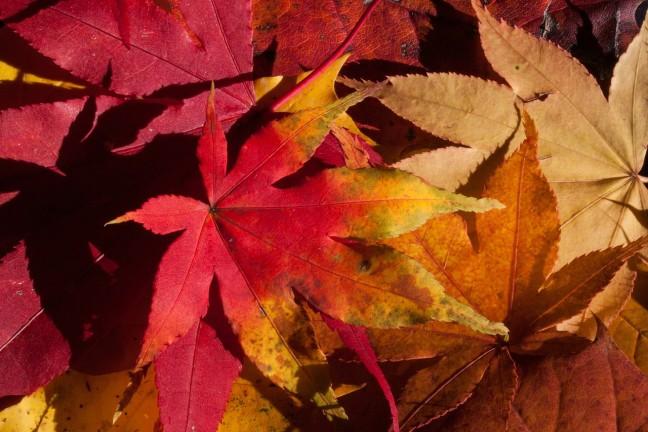 idén ősszel