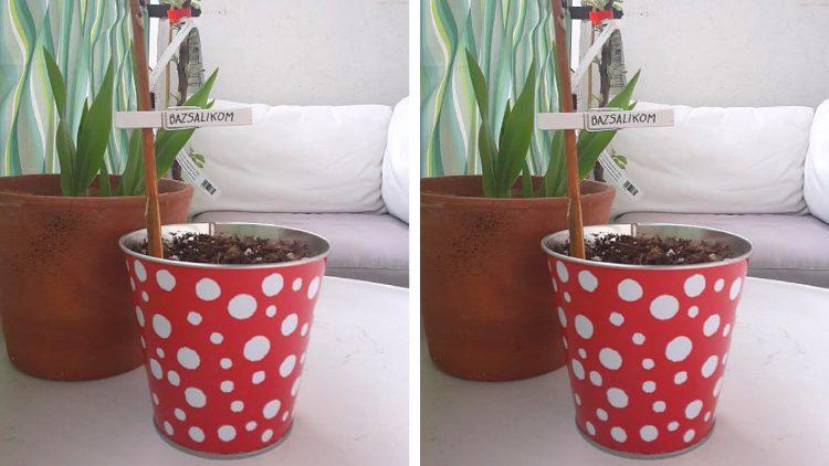 csipeszes növényjelölő