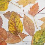 Színpompás emlék: füzetborítóval fóliázott falevelek
