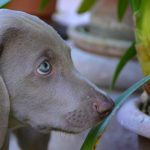 Pet and Kid Friendly House Plants